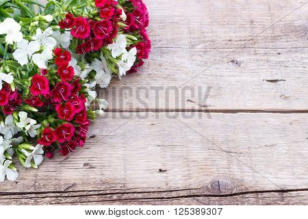 Carnation (Dianthus chinensis) flowers closeup white and red on wooden background