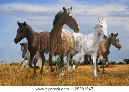 free herd of horses galloping across the steppe spacious