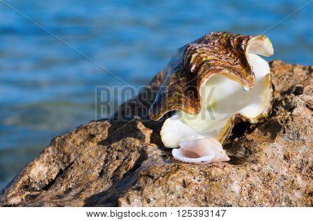 Sea Shells On The Rocks At A Tropical Beach