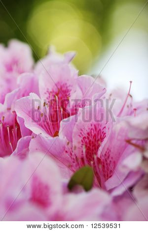 Spring flower bloom