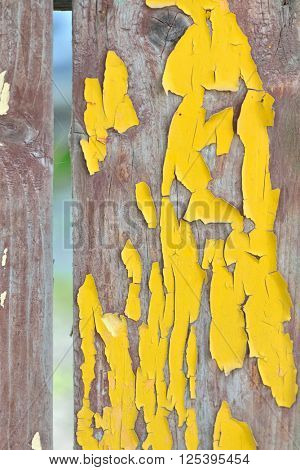 Old wooden planks with cracked yellow color paint