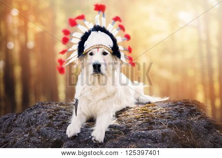 golden retriever dog in a native american headdress
