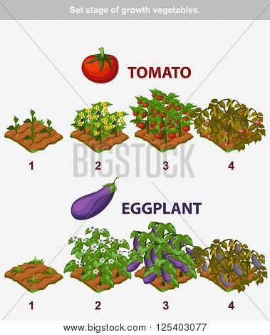 stage of growth vegetables. Tomato and Eggplant in vector for playing a perspective. game element