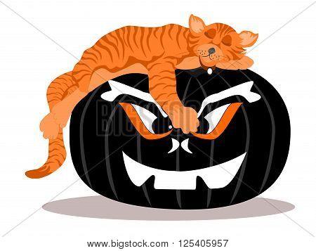 orange cat asleep black scary face pumpkin, vector, png format