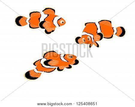 clown fish orange, three white striped, vector, illustration