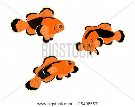red saddle-back clown tropical fish, vector, png format