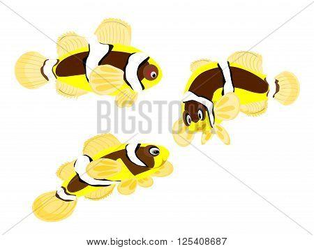 clarkii clown tropical fish, vector, png format,