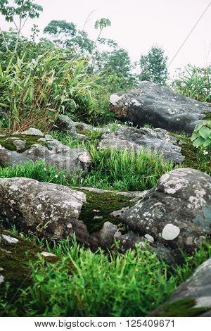 The ground with grass , plant , moss and stone