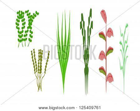 ocean tall plants, vector, png format, illustration,