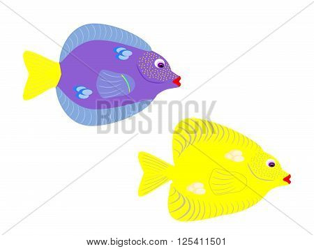 Blue and yellow tropical tang fish on isolated white background