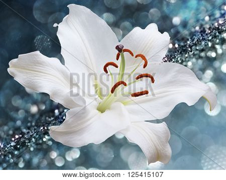 White lily flower on background with bokeh effects.