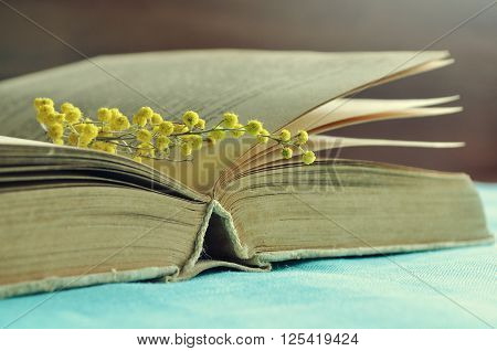 Spring retro still life - open worn book with small mimosa branch under warm light. Vintage filter processing. Selective focus at the book spine.