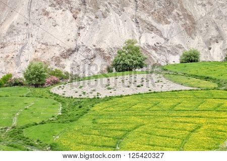 Himalayan oasis â?? Ladakh, Jammu & Kashmir, India