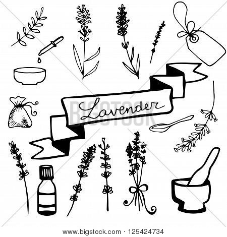 Hand drawn lavander set monochrome on light background