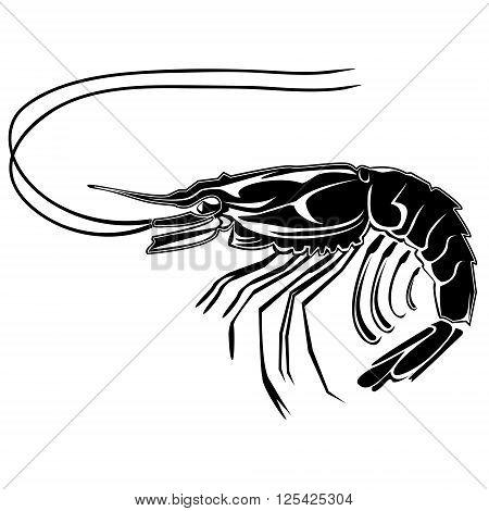 Shrimp White