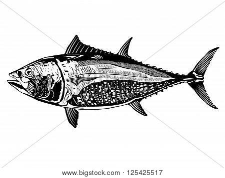 Tuna Fish Detailed