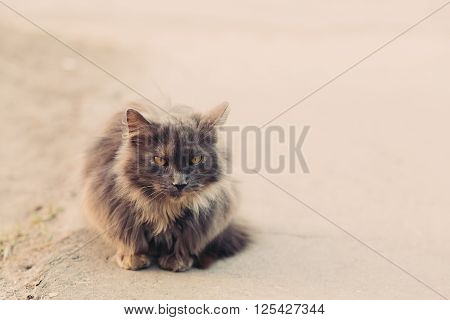 Beautiful angry cat sitting on stairs and looking at camera, copy space
