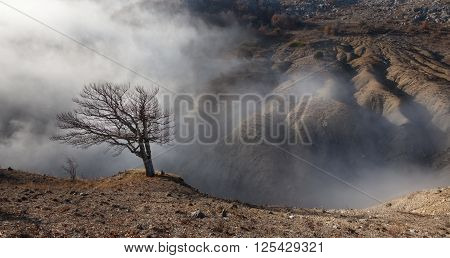 Badland. Lone tree on the edge of a ravine in the fog