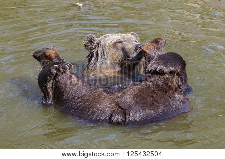 Spring Bear Bath