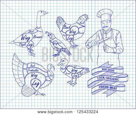 Beautiful Scheme Cutting Chicken Turkey Duck Goose Quail With Chef