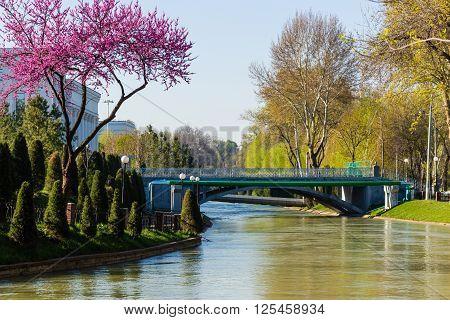 River in the centre of the Tashkent Uzbekistan. Spring in Tashkent