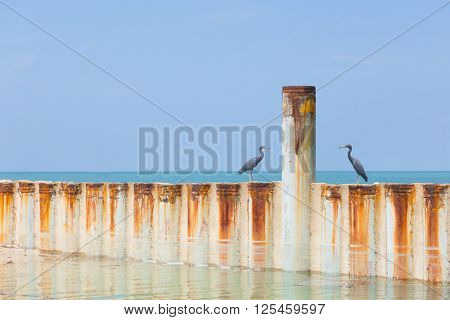 Two birds sitting on a metal wave breaker at the coast of Malaysia staring at an iron pole