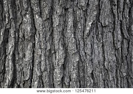 Close up texture of natural tree trunk