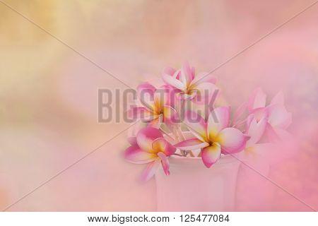 Pink  Frangrant Flowers Plumeria Or Frangipani In White Vase