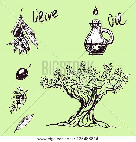 hand drawn ink olive branch olive oil olives. vector eps 10