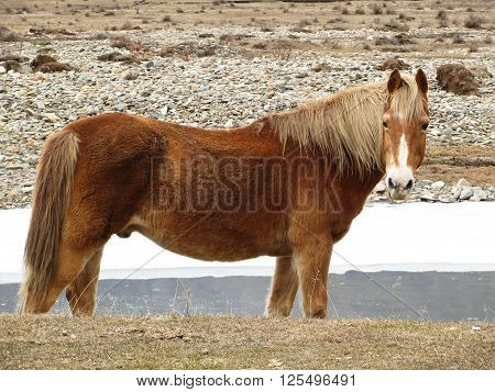 interested gaze of a young stallion, a horse near the river