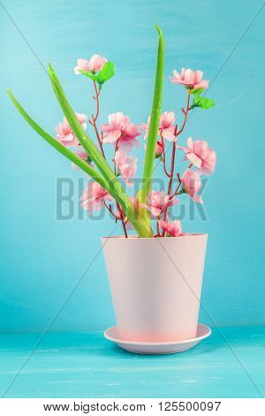 Pink flower in a pot on a blue background.