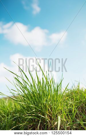 landscape outdoor green grass detail and blue sky