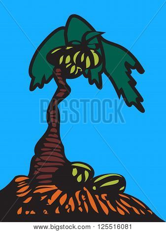 Palm tree with coconuts isolated on blue light background. Coconuts on the ground. Summer team. Vector illustration