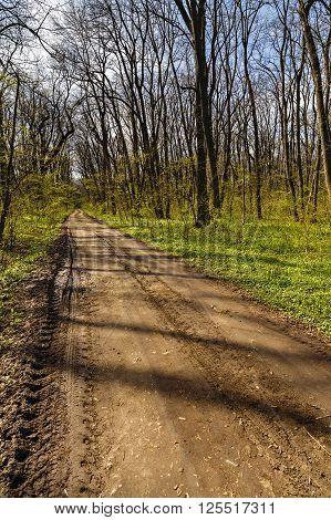 Hiking Trail In A Beautiful Hornbeam Forest