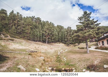 Pinetree forest landscape in Madrid mountain range.