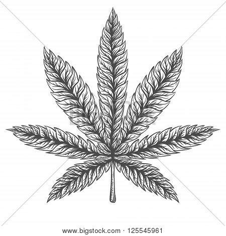 Marijuana Leaf. Hand drawn isolated illustration on watercolor background.