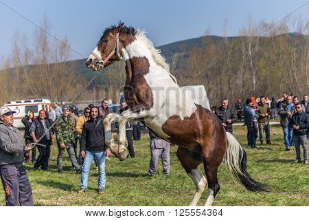 Todorovden In Kalugerovo Village, Bulgaria