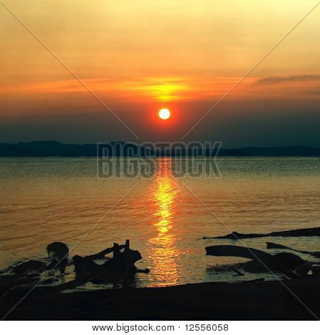 beauty sundown seascape with dark snags on coast foreground