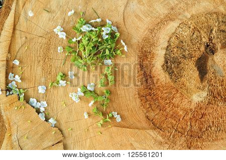 Oldschool vintage style wild white flowers blossom in the springtime with brown wood boards