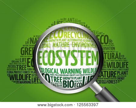 Ecosystem Word Cloud With Magnifying Glass