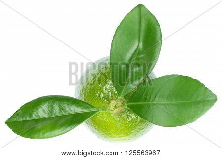 Lime Limes Fruits Top View Isolated On White