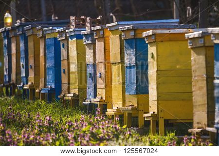 Bee hives on spring garden with blooming fruit trees with blossom and flowers