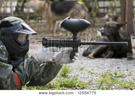 wild dogs look at the sniper
