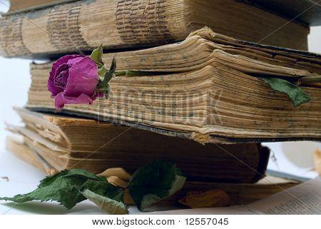 dry flower forgotten in old book
