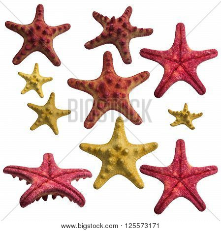Starfish collage pack isolated on white background