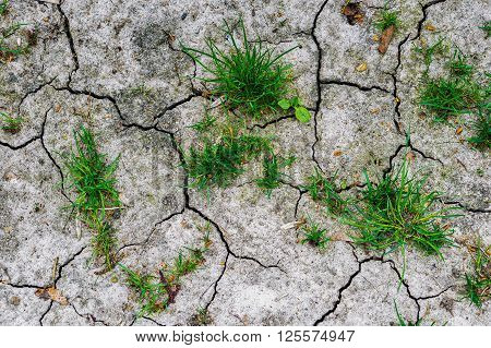 Texture Of Grey Withered Earth With Cracks And Green Grass