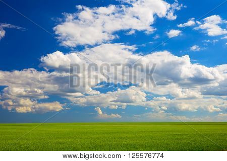 Wheat field in a sunny summer day blue sky with clouds. Beautiful landscape. green field and clouds