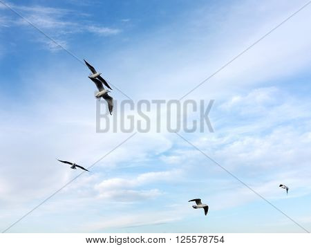 Swarm Of Sea Gulls Flying Close To The Beach Of An Island