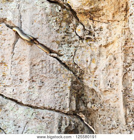 Sleeping Snake In A Huge Stone Crack