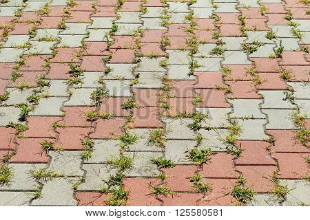 Textured Background Pavement Tiles With Green Grass